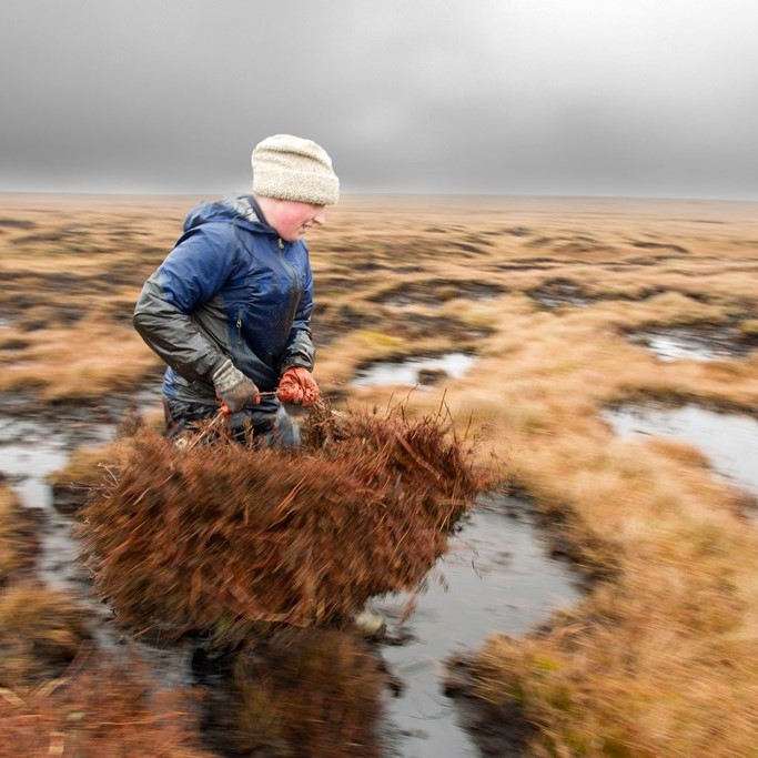 Volunteer Working On Peat Bog   Credit RSPB Images